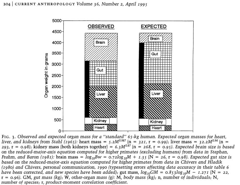 Proportion comparée des organes primates et humains