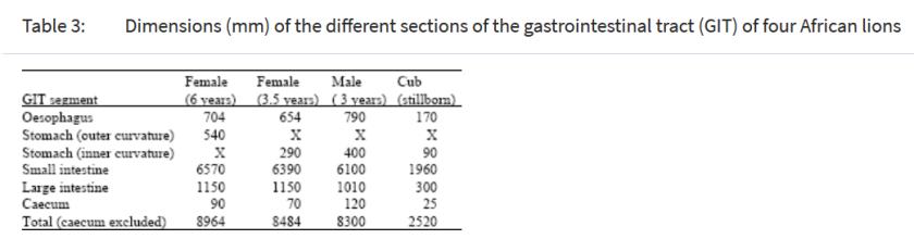 Smith et al. 2003 panthera leo intestine length