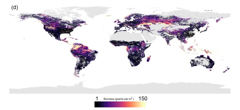 Vers de terre dans le monde biomasse