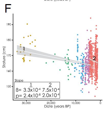 Décroissance stature paléo Cox et al. 2019