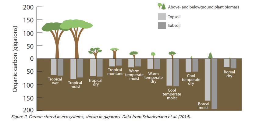 Carbon sinks Scharlementn et al 2014