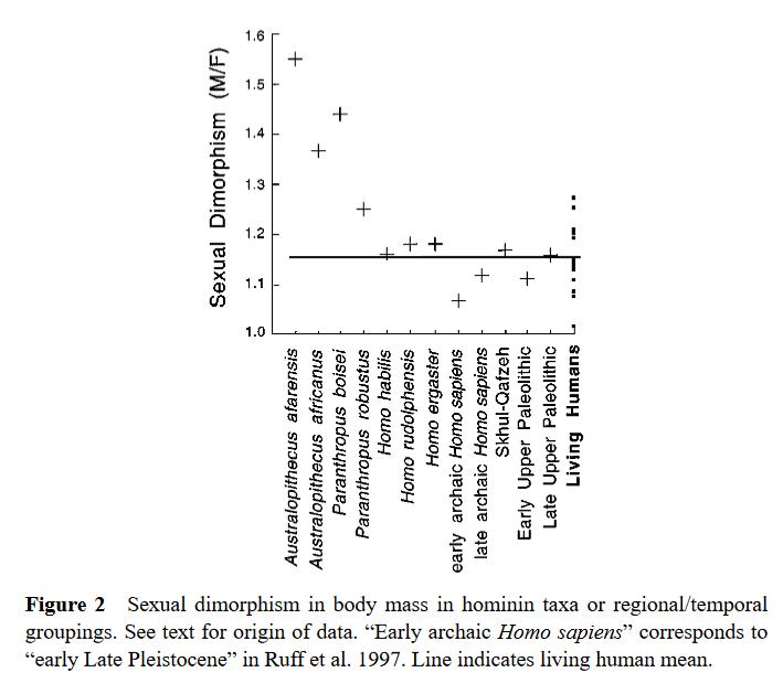 Dimorphisme australopithèque et Homo Ruff 2002