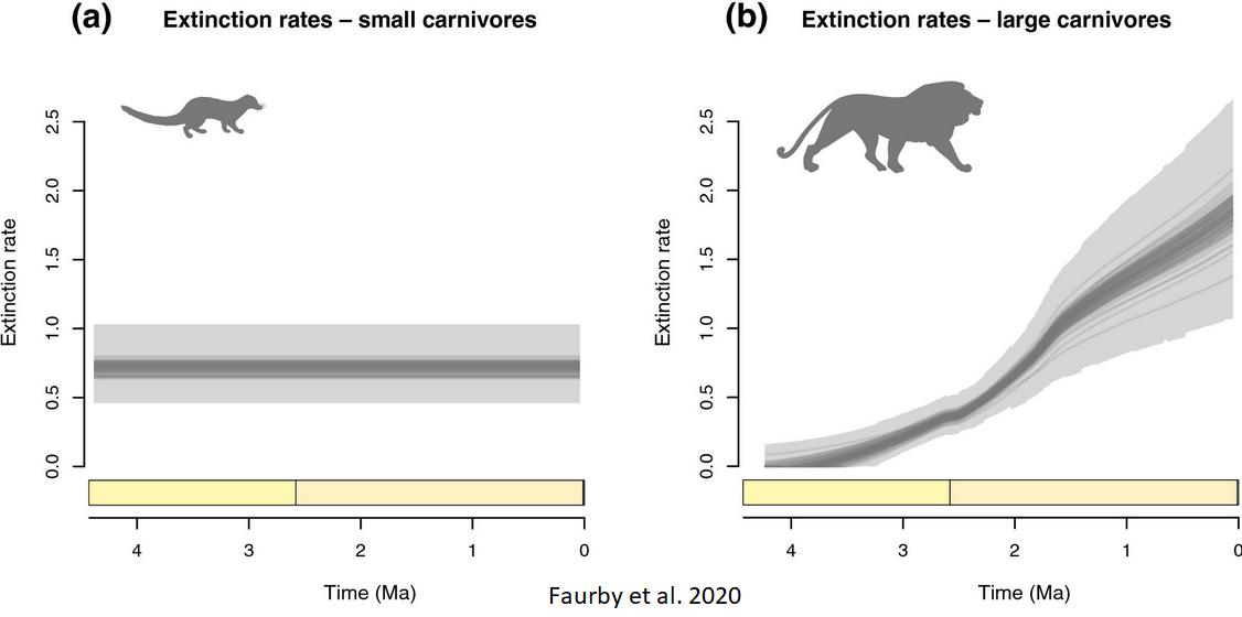 Faurby et al. 2020 extinction rate