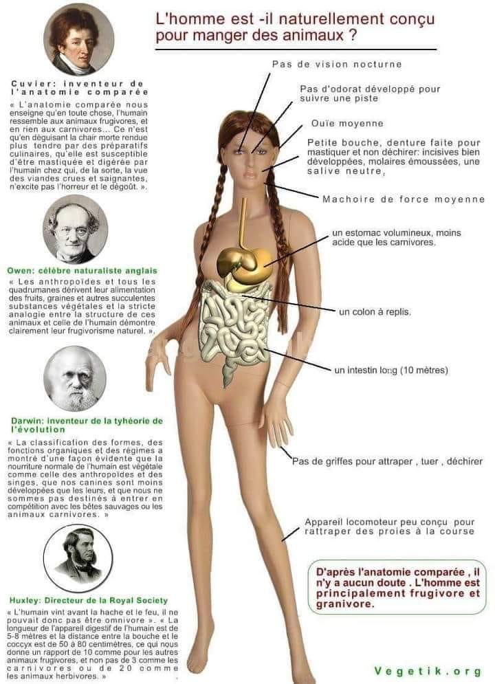 Vegetik anatomie comparée